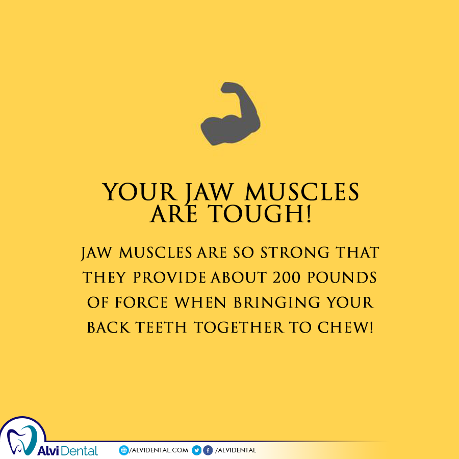 Your Jaw Muscles are tough!
